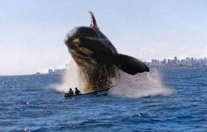 baleine 001